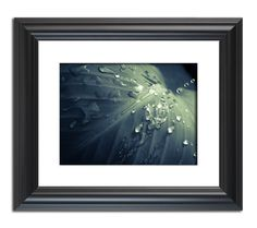 Rain Dropping on Canna Leaf, Framed Nature photo Wall Art Print by nature photographer Melissa Fague. Other Print options  are available. http://www.pipafineart.com