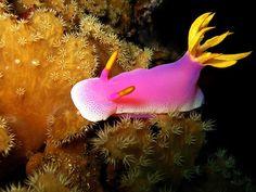 pink sealife - Google Search