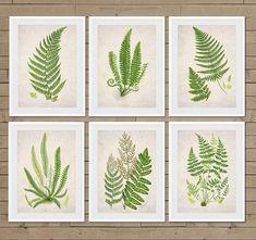 Fern ferns fern leaf fern prints fern decor Fern Wall