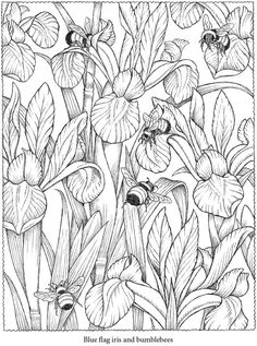 Colouring-in page - sample from Creative Haven NatureScapes Coloring Book via Dover Publications ~s~