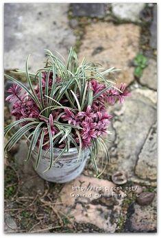 寄せ植え♪ | *Garden Frais* ガーデニング オタク?の日記 My Flower, Flower Pots, Storm In A Teacup, Garden Paths, Pretty Flowers, Garden Inspiration, Container Gardening, House Plants, Floral Arrangements