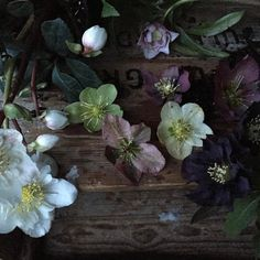 One from last year. A whole load of hellebores and a rather annoying piece of wax  If I had to pick a favourite I think it's the dusky pink in the centre. Or maybe the black on the right ... oh I'm not sure Which do you prefer and why? (Although it's a bit like choosing your favourite child)