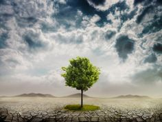 Trees, jewish holidays, arbor day, Tu B'Shevat, Israel, Hebrew, Benefits of Trees, Carbon Sink, Global Warming, Oxygen