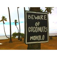 They mean falling coconuts.  Most of the coconuts are harmless.