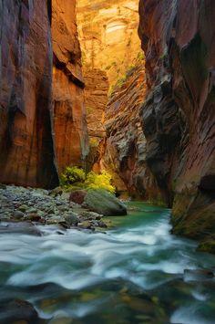 Virgin River Narrows in Zion National Park