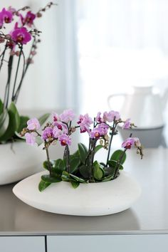 The Phalaenopsis is the orchid of the month! Remember that your orchid loves light spaces but shouldn't be in direct sunlight all the time. Want to find out everything about the Phalaenopsis? Orchid Pot, Orchid Plants, Orchid Flowers, Exotic Flowers, Beautiful Flowers, Orchid Flower Arrangements, Orchids Garden, Phalaenopsis Orchid, Purple Orchids