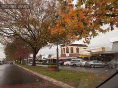 Cambridge, New Zealand | Late autumn colours Cambridge New Zealand | Michael Jeans