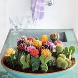Cactus Garden  from From Ezter With Love
