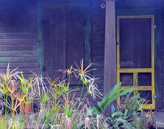 Yellow screen door
