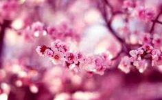 """Képtalálat a következőre: """"tavaszi virág"""""""