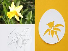 Im Garten die blühenden Narzissen bewundert, gezeichnet (und verworfen und gezeichnet...), gescannt und vektorisiert... bis zum ersten Probe-Plott.