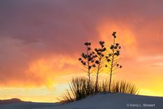 White Sands Image 8 - Photograph at BetterPhoto.com White Sands National Monument, Natural Beauty, Celestial, Sunset, Nature, Photography, Outdoor, Outdoors, Naturaleza