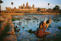 Available for sale from Sundaram Tagore Gallery, Steve McCurry, Lotus Gatherer, Cambodia Ultrachrome print, 20 × 24 in Steve Mccurry, Places Around The World, The Places Youll Go, Places To See, Around The Worlds, Angkor Wat, National Geographic, Brisbane, Laos