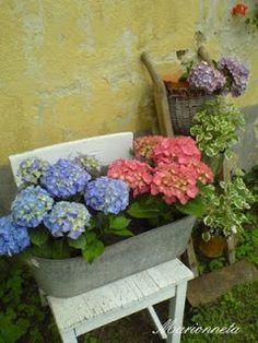 Marionneta: Jen tak... Plants, Hydrangeas, Plant, Planets