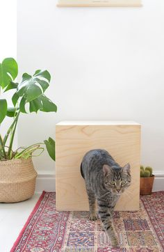 Katzen Schlafplatz aus Holz selber baue | DIY | cat house @burkatron
