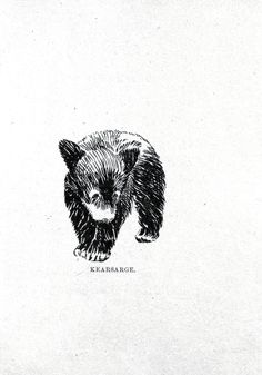Animal - Bear - Baby bear drawing 5