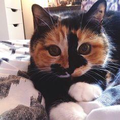 Cats Katzen
