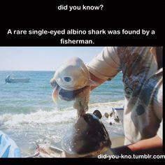 One-eyed albino shark.