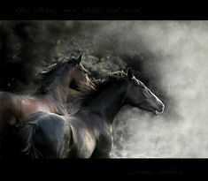Running horses...the energy and spirit in this picture is intoxicating to me.