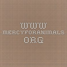 www.mercyforanimals.org