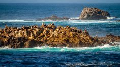 ***Sea Lions at Point Lobos (California) by Dirk Seifert on 500px