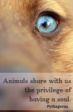 """Animals share with us the privilege of having a soul."" -Pythagoras"