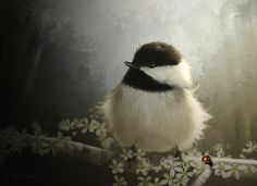 "chickadee ... ** The PopDot Artist ** Please Join me on the Twitter @AlabamaBYRD & Be my Friend on the FaceBook --> http://www.facebook.com/AlabamaBYRD ** BIG BYRD HUGS & SMILES & PRAYERS TO EVERYONE IN NEED EVERYWHERE ** ("")< Chirp Chirp said THE BYRD http://www.facebook.com/AlabamaBYRD"
