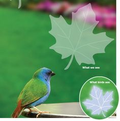 Stop Birds From Hitting Your Windows Hummingbird Decal Envelope - Window alert hummingbird decals amazon