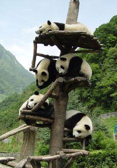 stacked pandas