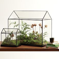 love these tabletop greenhouses.