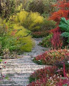 Awesome Autumn / Fiery rainbow of low growing persicaria.  Photo by Melissa Lucas @ Fine Gardening.