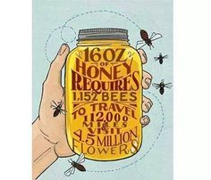 Bees < Spring or National Honey Bee Day August 16 >
