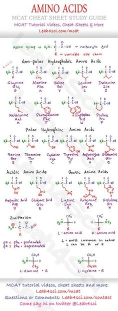 MCAT Amino Acid Chart - Study Guide Cheat Sheet for the Biology/Biochemistry section on the MCAT. Includes structure, variable groups, hydrophobic/hyrophilic acidic and basic groups