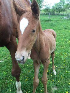 Crippled kill pen horse has foal named Faith