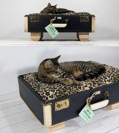 cama-gato-ecoinvento