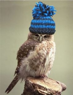 Blue and blue on an owl... a match made in heaven!