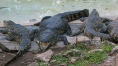 Crococun Zoo is a great place to visit for an hour or two.