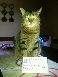 Cat shaming. Cat Shaming, Little Dogs, Haha, Kitty, Funny, Animals, Doggies, Animales, Small Dogs