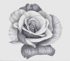 Rose Drawings In Pencil | Recent Photos The Commons Getty Collection Galleries World Map App ...