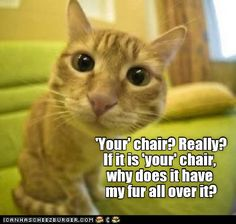 yes, that's about right for an orange tabby