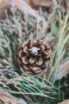 pine cone engagement ring - can be placed on Christmas tree!