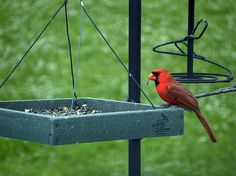 How to Attract Cardinals: 7 Steps (with Pictures) - wikiHow