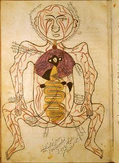 Tashrīḥ-i badan-i insān (The Anatomy of the Human Body) by Manṣūr ibn Muḥammad ibn Aḥmad ibn Yūsuf Ibn Ilyās