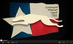 Rescuing greyhounds and spreading the word about what GREYT pets they are is a passion of our family.