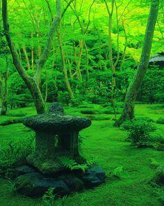 ジメジメとした梅雨の時期。梅雨が好き、という人はあまりいないと思います。気分が沈みがちのこの季節ですが、苔が一番綺麗に映える時期でもあるんです。今回はこの時期だからこそ見に行きたい日本全国の「苔が美しい」絶景スポットを6つ、ご紹介します。