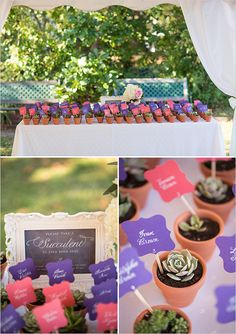 potted succulent escort cards