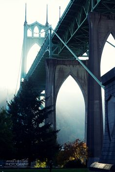 Photograph from Cathedral Park of the St. Johns Bridge Portland, OR by Jessica Nichols.