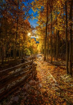 """""""The Fall Path"""", Aspen, Colorado, USA by Toby Harriman on 500px"""
