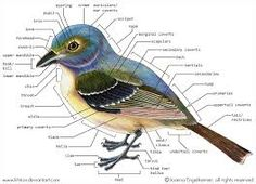 bird dissection diagram에 대한 이미지 검색결과