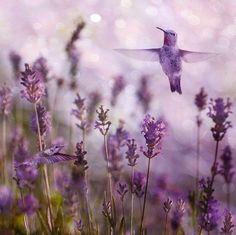 Beautiful Humming birds